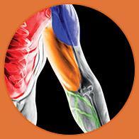 MuscleTech - VaporX5 Next Gen (30 lần dùng) - circle 4