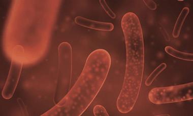 Prozis - Multi-Probiotic 1.5 Billion (60 viên) - multi pro4